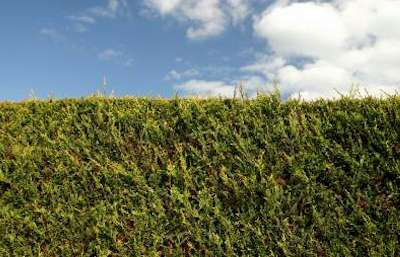 Hazelbrook Lawn Mowing Hedge Care Services