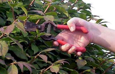 Hazelbrook Lawn Mowing Pruning Services